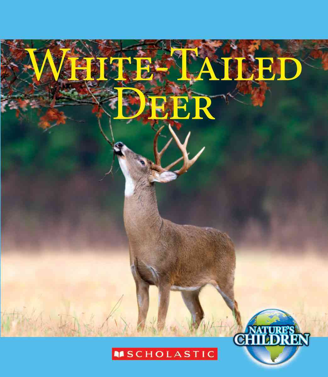 White-Tailed Deer By Marsico, Katie